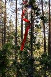 Młody drzewo z czerwonym faborkiem Obrazy Stock