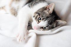 Młody kot na koc Obrazy Stock