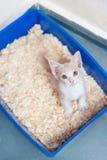 Młody kota use toaleta Zdjęcie Stock