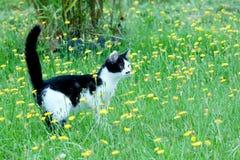 Młody nieociosany kot na Fotografia Stock