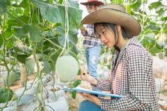 M?ody rolniczy enginner studiuje nowego melonowego doro?ni?cie typ fotografia stock