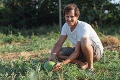 Młody rolnik sprawdza jego arbuza pole przy organicznie eco gospodarstwem rolnym Zdjęcia Royalty Free