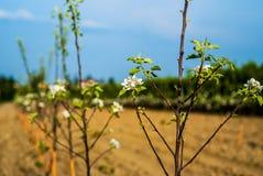 Młodzi drzewa w surowym zdjęcia stock