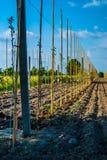 Młodzi drzewa w surowym zdjęcia royalty free