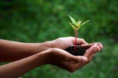 M?os humanas que guardam a planta verde sobre o fundo da natureza imagem de stock