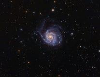 M101 Pinwhell Galaxy. Real Colorfull Photo Royalty Free Stock Photo