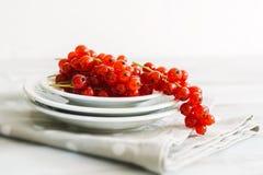 mûr rouge de corinthes Photographie stock