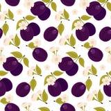 Mûr vidangé Un ensemble d'éléments La fleur de prune Fond blanc d'isolement illustration libre de droits