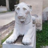 m?rk lion arkivfoto