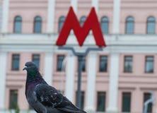 M-símbolo del metro y de la paloma subterráneos Imágenes de archivo libres de regalías