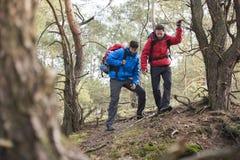 Męscy backpackers wycieczkuje w lesie Zdjęcia Stock