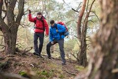 Męscy backpackers wycieczkuje w lesie Obraz Stock