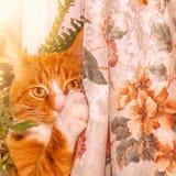 Męscy kotów stojaki na windowsill Fotografia Stock