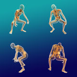 Męska Anatomia 8 Zdjęcie Royalty Free