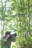 Męski fotograf W Bambusowym lesie Zdjęcia Stock