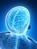 Męski mózg Obrazy Stock