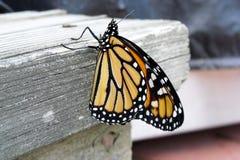 Męski monarcha Zdjęcia Royalty Free
