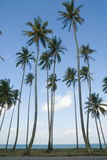 m terengganu drzewa kokosowe Fotografia Royalty Free