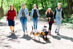 M?tter mit den T?chtern, die mit zwei Hunden auf Leinen auf Waldweg gehen stockfotografie