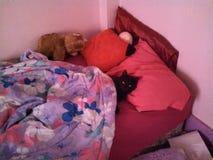 M. zwarte kat gelieve te staan op royalty-vrije stock fotografie