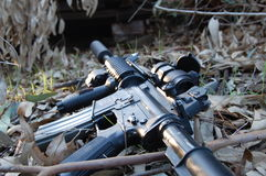 M4 in the leaves Royalty Free Stock Photos