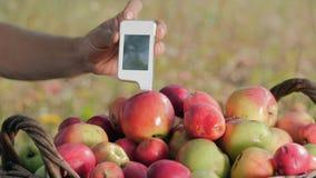 Maß für den Inhalt von Nitraten in den Äpfeln stock footage