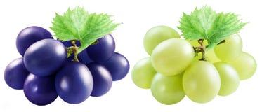 Małe gałąź błękitni i biali winogrona z liśćmi zdjęcie stock