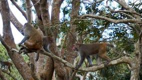 Małpi makak w lesie tropikalnym Małpuje w naturalnym środowisku obrazy stock