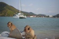 Małpia głodna jedzenie woda fotografia stock