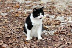 Mały czarny i biały domowy kot patrzeje ciekawie w odległości podczas gdy siedzący na żwir lasowej ścieżce zakrywającej z wysuszo zdjęcie stock
