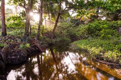Mały jezioro otaczający greenery i drzewami Słoneczni promienie przechodzi przez drzew zdjęcia stock
