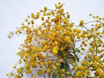Mały kolor żółty kwitnie na białym tle zdjęcie royalty free