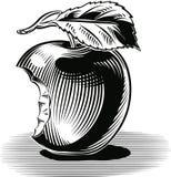 Maçã amarga que inclina-se contra uma tabela ilustração do vetor