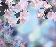 Maçã de florescência O tempo de mola… aumentou as folhas, fundo natural Fundo Alvorecer no jardim foto de stock