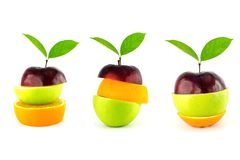Fruto misturado da árvore Fotos de Stock Royalty Free