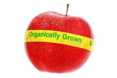 Maçã etiquetada orgânica foto de stock royalty free