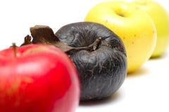Maçã podre na fileira de maçãs frescas Imagens de Stock Royalty Free