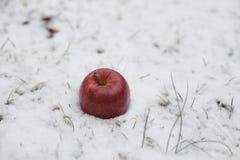 Maçã vermelha na neve fotos de stock