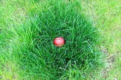 Maçã vermelha que encontra-se na grama Foto de Stock