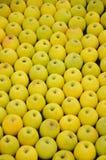 Maçãs amarelas Fotografia de Stock Royalty Free