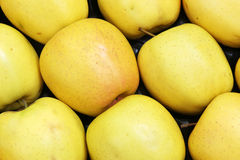 Maçãs amarelas Fotos de Stock