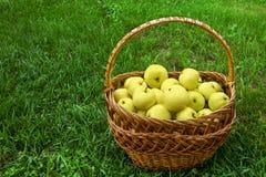 Maçãs amarelas na cesta Imagem de Stock Royalty Free
