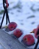 Maçãs congeladas na neve imagens de stock royalty free
