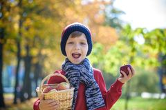 Maçãs da colheita da criança no outono Bebê pequeno que joga no pomar da árvore de maçã Fruto da picareta das crianças em uma ces imagens de stock royalty free