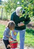 Maçãs da colheita do vovô e da criança em Michigan fotografia de stock royalty free