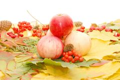 Maçãs de encontro às folhas de outono imagem de stock royalty free