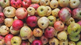 Maçãs de qualidade inferior estragadas Fundo fora das maçãs selvagens Fotos de Stock
