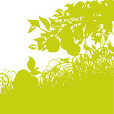 Maçãs e colheitas Foto de Stock Royalty Free