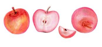 Maçãs e fatias da maçã com sementes e peciole imagem de stock royalty free
