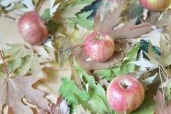 Maçãs e folhas de bordo em um fundo de madeira Fotos de Stock Royalty Free